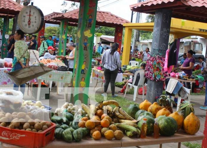 nicaragua, agricola, ciclo, matagalpa, produccion,