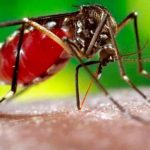 honduras, nuevos casos, dengue, enfermedades,