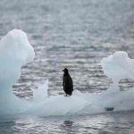 artico, hielo marino, cambio climatico,