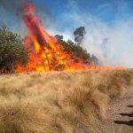 mexico, incendios forestales, medio ambiente, fuego,