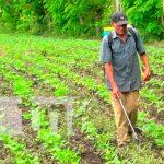 Nicaragua, nueva segovia, productores, ciclo agrícola 2021