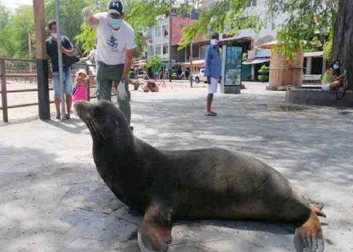ecuador, lobo marino, atropello, animales,