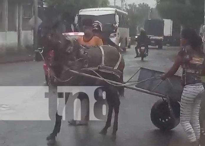 nicaragua, agresion, maltrato, managua, caballo,