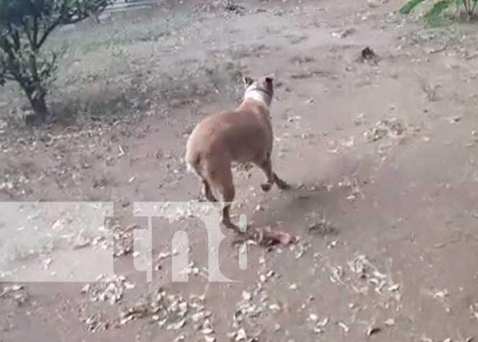 nicaragua, maltrato, perro, los vanegas, managua,