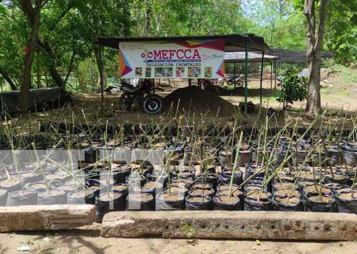 nicaragua, vivero, chontales,