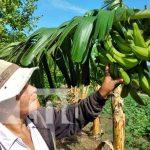 nicaragua, patio saludable, tipitapa, economia familiar,