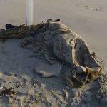 Libia, cadáveres de niños, crisis migratoria, barco,