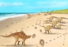 ciencia, descubrimiento, dinosaurios, huellas, caracteristicas
