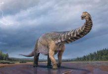 ciencia, australia, descubrimiento, dinosaurio, caracteristicas