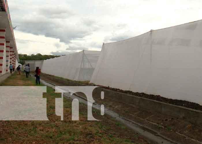 nicaragua, inversion, comercializacion, chile, empresa santiago de nicaragua