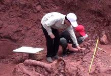 ciencia, china, descubrimiento, dinosaurio, fosil