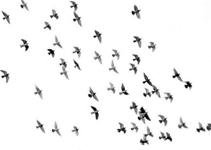 Estados unidos, pájaros, ciega y mata, washington,