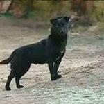 bolivia, secuestro, niña, ayuda, perro, autoridades,