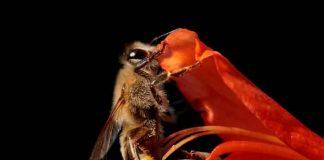 abejas, clones, científicos, superpoder,