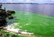 estados unidos, algas toxicas, medio ambiente, contaminacion,