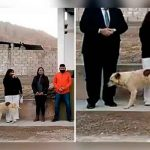 argentina, video, perro, alcaldesa, viral, animales, videos virales,