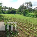 Nicaragua, carazo, productores, cultivos,