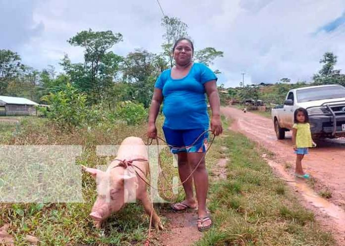Nicaragua, caribe norte, seguridad alimentaria, bonos porcinos,