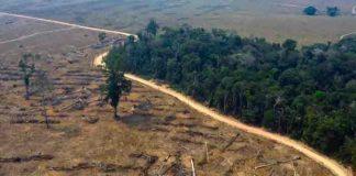 brasil, medio ambiente, deforestacion, amazonia,
