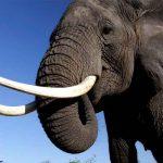video, viral, elefante, comida, robo, tailandia, insolito,