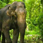 india, elefante, rebaño, accidente,