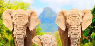 video, china, manada, elefantes, viral, siesta, redes sociales, mamiferos,