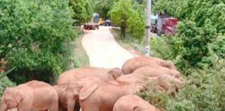china, elefantes, manada, migracion,