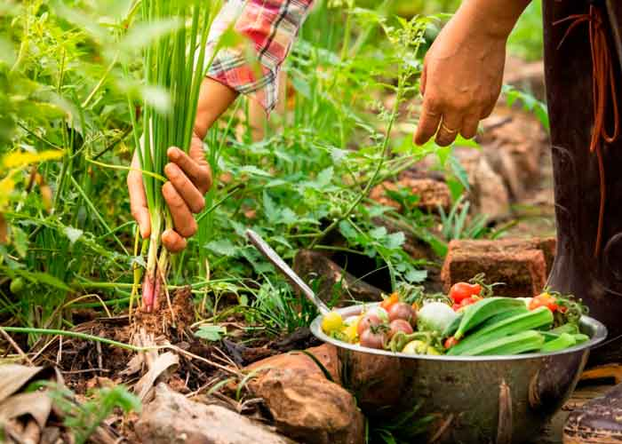 Gastronomía Sostenible, bienestar, biodiversidad, desnutrición,