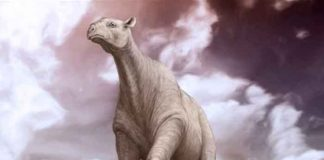 gigantesco, mamífero, más grande , cráneo,