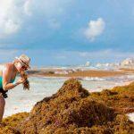 mexico, playas, quintana roo, alarma, llegada, algas marina,