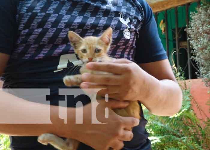 nicaragua, nandaime, jornada, veterinarios, animales,