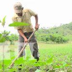 Nicaragua, Ocotal, ciclo agrícola 2021, productores,