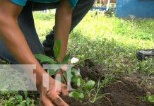 Nicaragua, ometepe, jornada nacional de reforestación , amor a la madre tierra,
