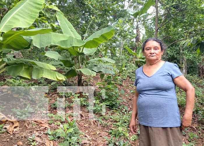 nicaragua, masaya, patio saludable,