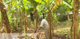 nicaragua, patio saludable, managua, economia familiar,
