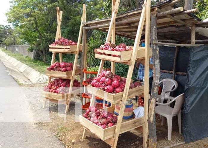 nicaragua, san marcos, pitahaya,