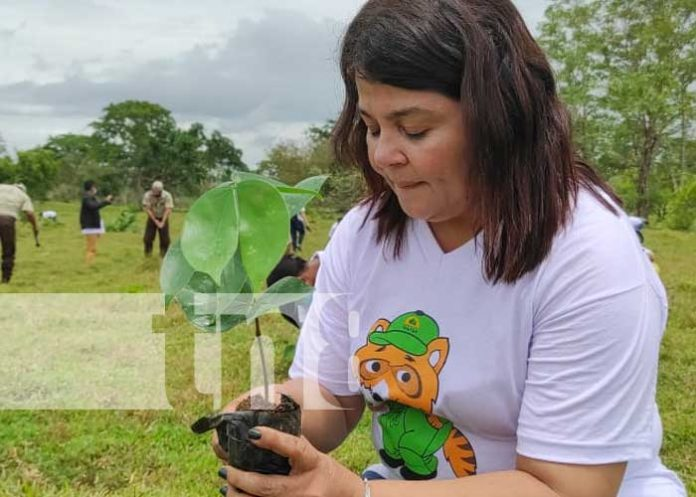 nicaragua, plantas, caribe, triangulo minero, reforestacion, rosita,