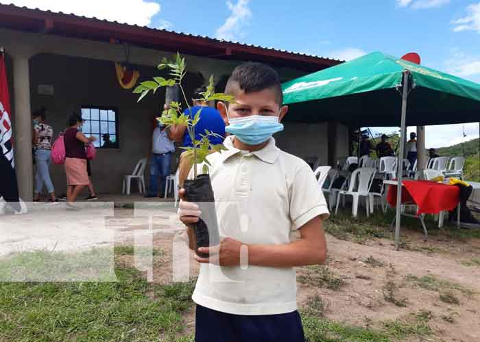 nicaragua, reforestacion, esteli, san nicolas, medio ambiente,
