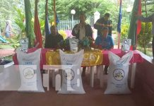 nicaragua, semilla, arroz, carazo, produccion,