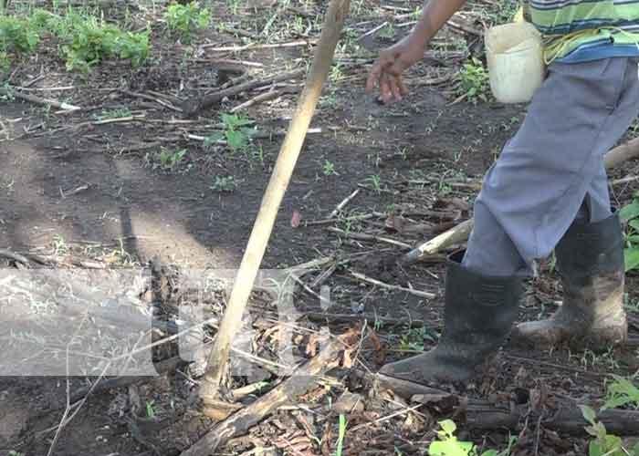 nicaragua, rivas, produccion, bono, semilla,