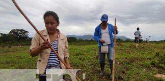nicaragua, semillas, bonos, produccion, caribe,