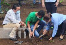 nicaragua, managua, siembra, arboles, colegio,