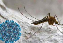 españa, virus del nilo, enfermedades,