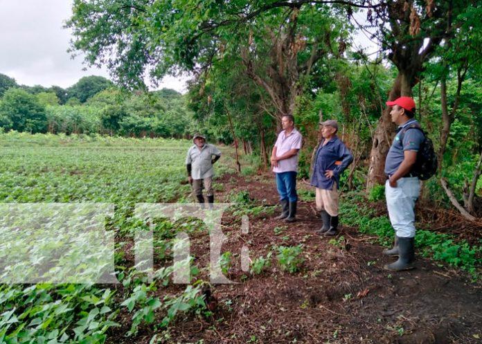 nicaragua, isla de ometepe, bono, frijol,
