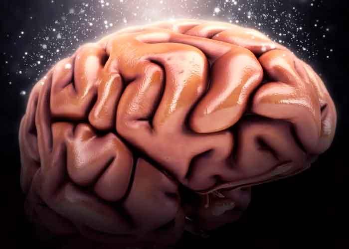 salud, cerebro, dia mundial, enfermedades, cuido