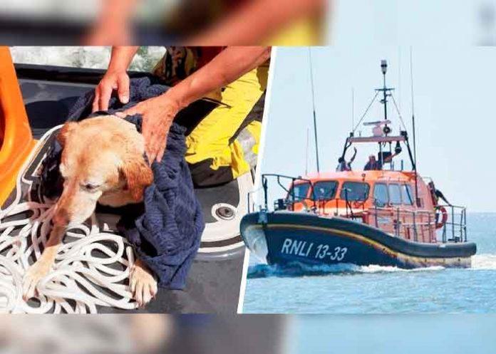 tendencia, Inglaterra, perro, bote salvavidas,