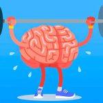 """El cerebro o """"materia gris"""", como se le conoce comúnmente, es uno de los órganos vitales de nuestro cuerpo. Controla las actividades cognitivas"""