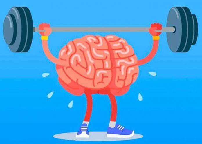 El cerebro o