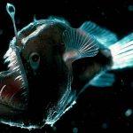 ciencia, pez, nueva especie, descubrimiento, caracteristicas