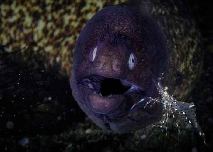 Insólito: Chinito ocupa anguila como supositorio